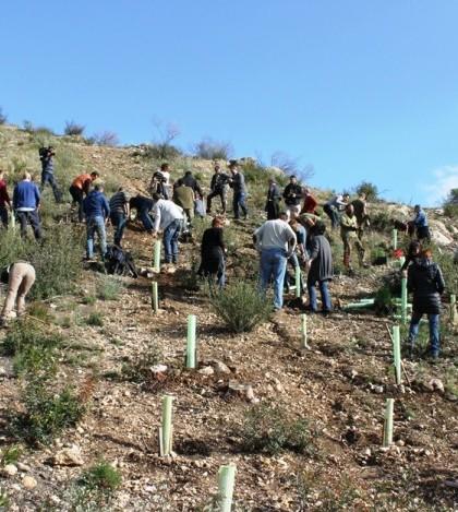 La campaña prevé la repoblación de tres hectáreas de pinar en la zona