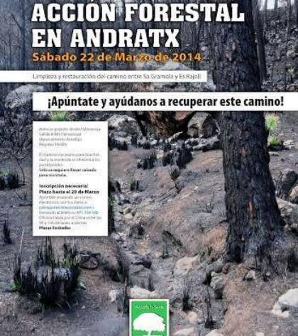 Cartel de la jornada de reforestación forestal en Andratx